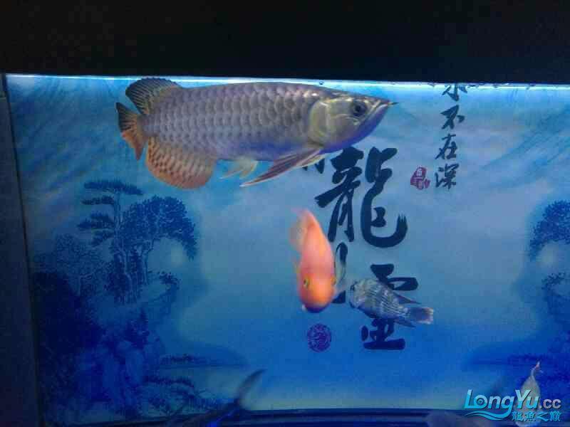 还剩两个月纪念 西安观赏鱼信息 西安博特第2张