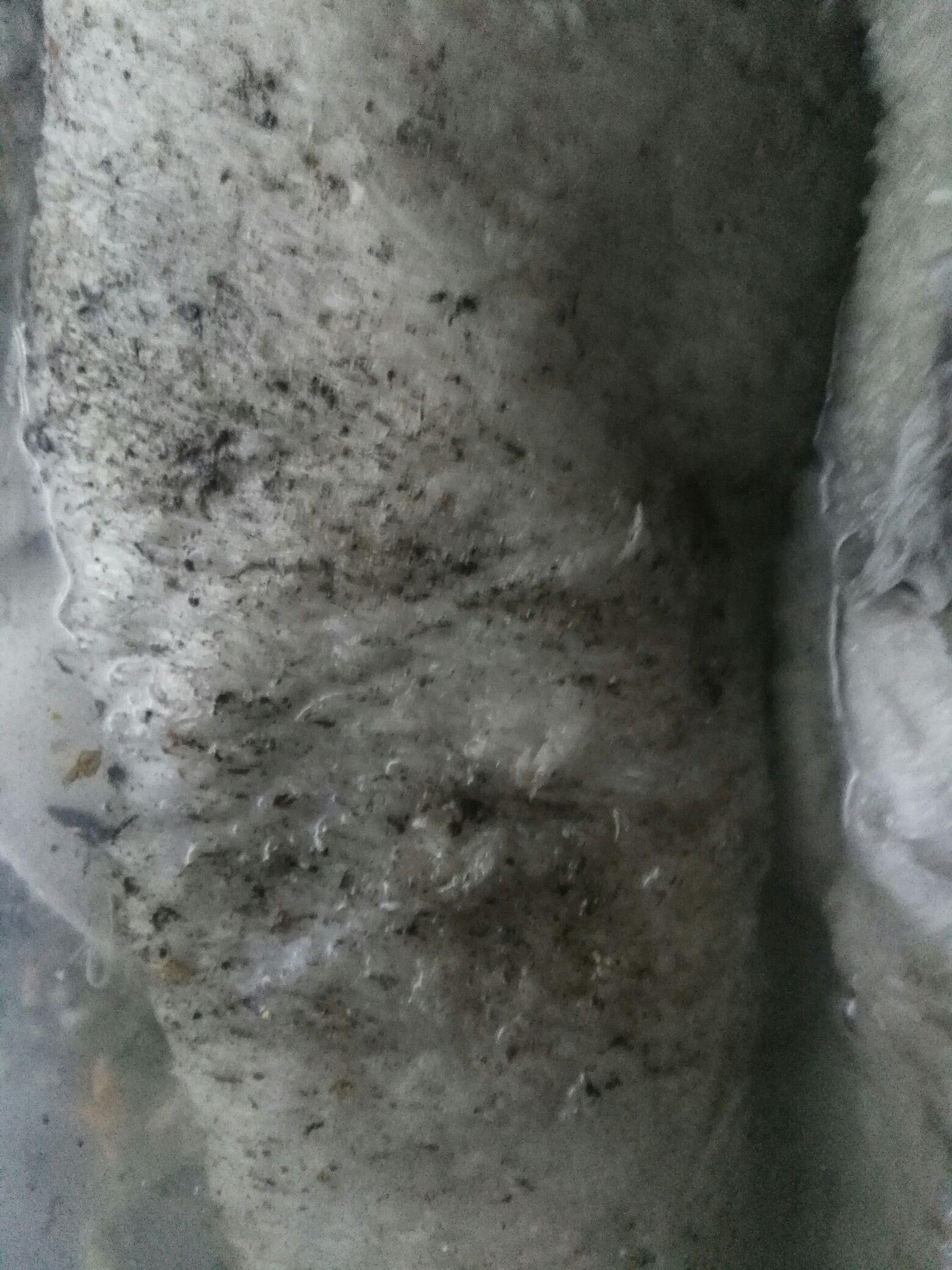 【西安泰虎】关于昨天洗衣机洗棉布 西安观赏鱼信息 西安博特第3张