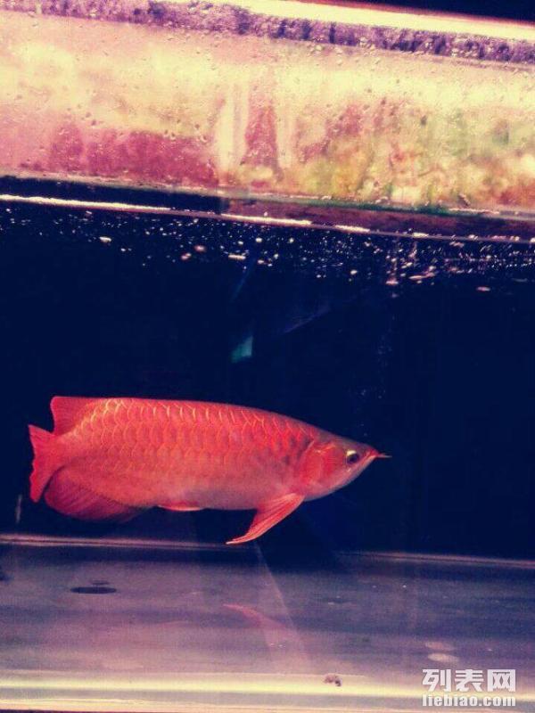 【西安泰虎】关于昨天洗衣机洗棉布 西安观赏鱼信息 西安博特第5张
