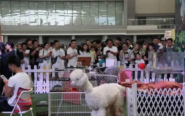【西安水族店】DIY灯条加功率 西安龙鱼论坛