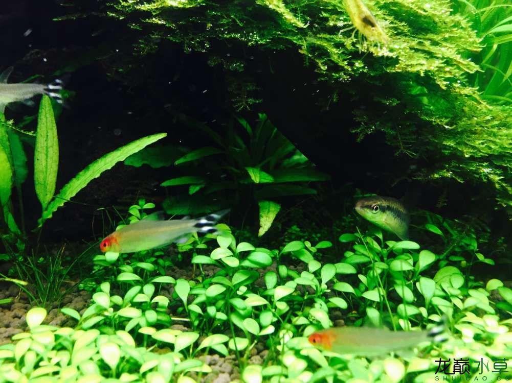 【西安花鸟鱼市场在哪】60草缸 西安观赏鱼信息 西安博特第4张