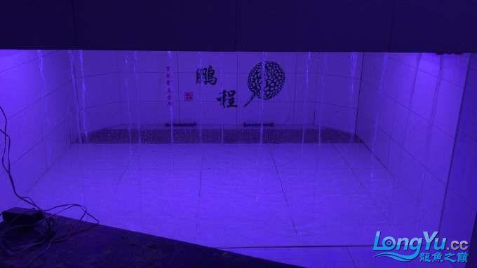 【西安鱼缸水族定做电话】鸿洋鹏程沈阳魟鱼繁殖会所全部完工超大水体供欣赏 西安观赏鱼信息 西安博特第40张