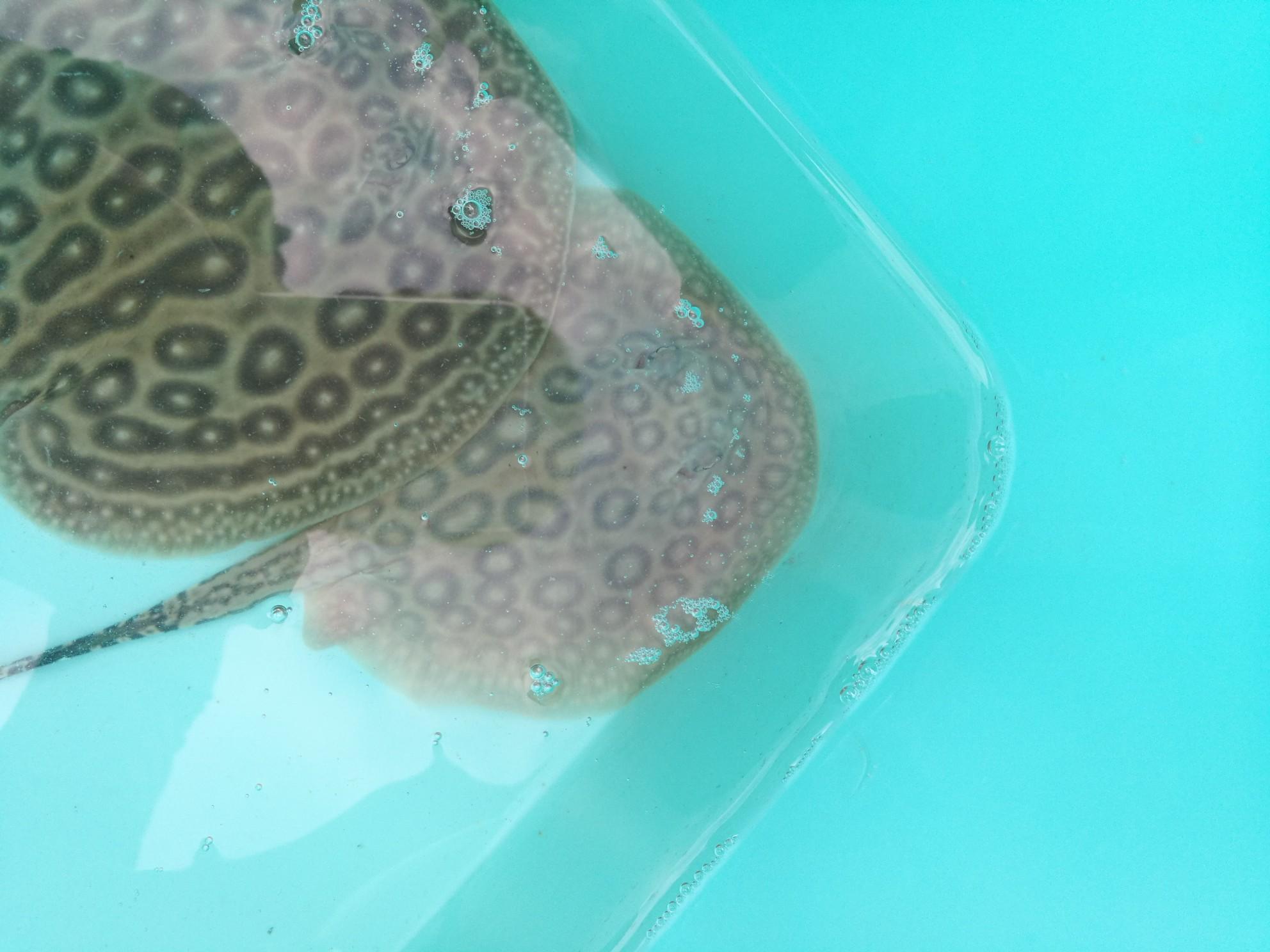小鱼都是别人的好 西安龙鱼论坛 西安博特第1张
