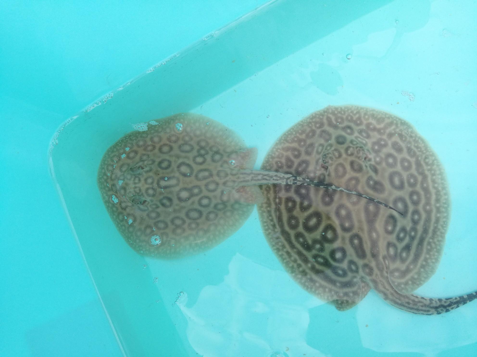 小鱼都是别人的好 西安龙鱼论坛 西安博特第5张