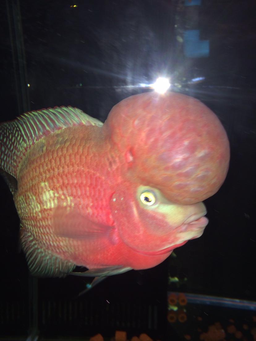 爆炸了 西安观赏鱼信息 西安博特第1张