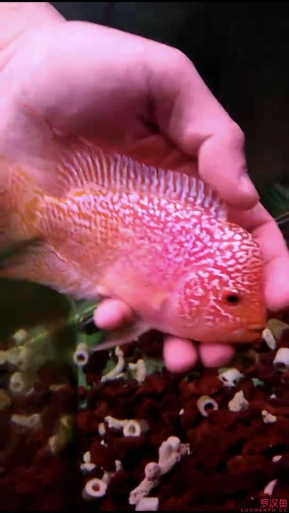 【西安二手鱼缸转让】还在路上的小罗 请教各位前辈品种和起头希望 西安龙鱼论坛 西安博特第2张