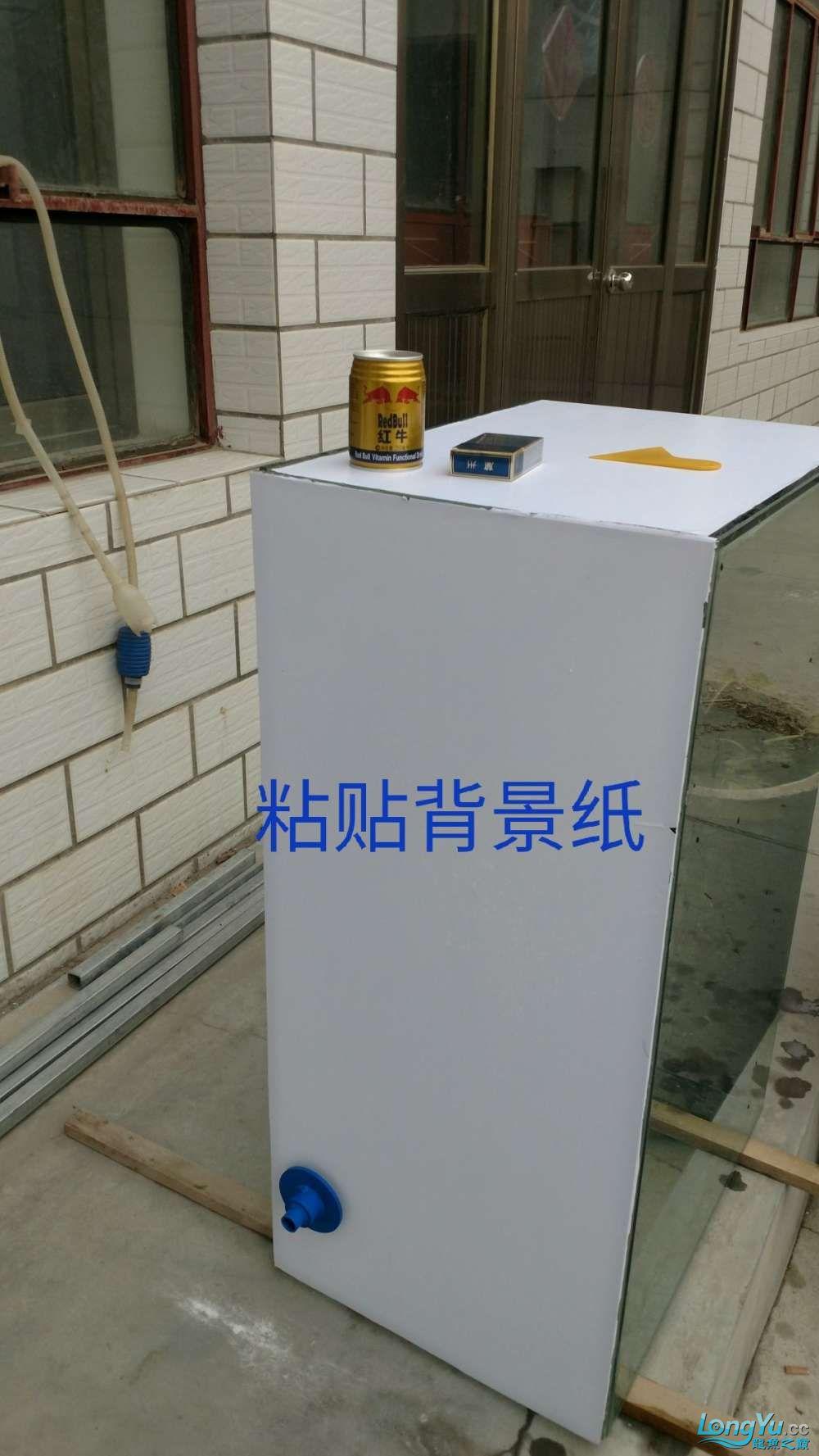 十川滤材试用报告 西安龙鱼论坛 西安博特第2张