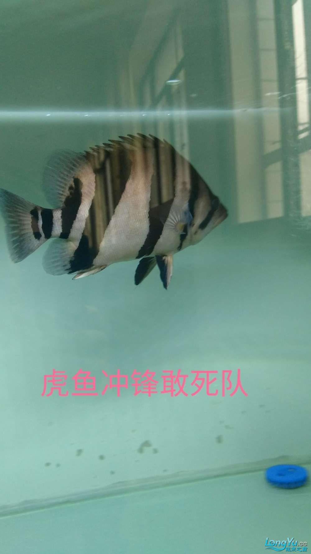 十川滤材试用报告 西安龙鱼论坛 西安博特第8张