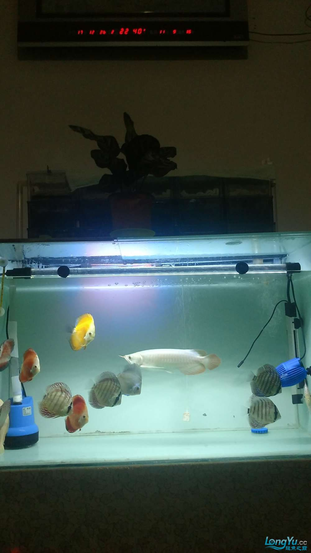 十川滤材试用报告 西安龙鱼论坛 西安博特第9张