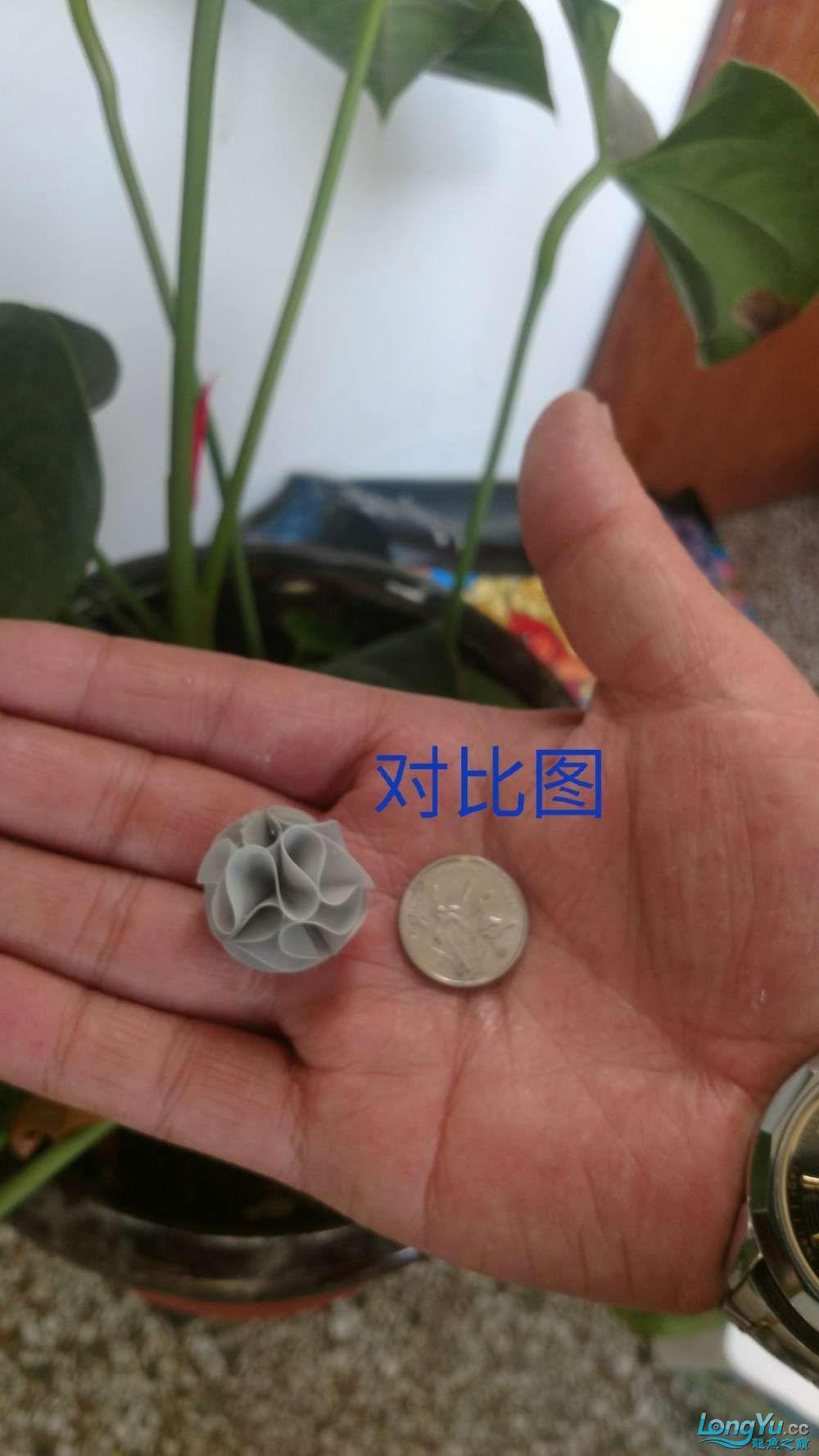 十川滤材试用报告 西安龙鱼论坛 西安博特第16张