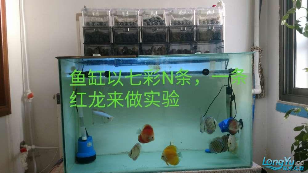 十川滤材试用报告 西安龙鱼论坛 西安博特第21张