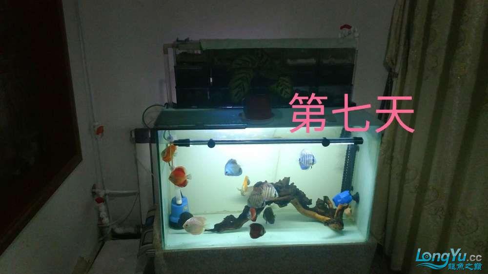 十川滤材试用报告 西安龙鱼论坛 西安博特第31张