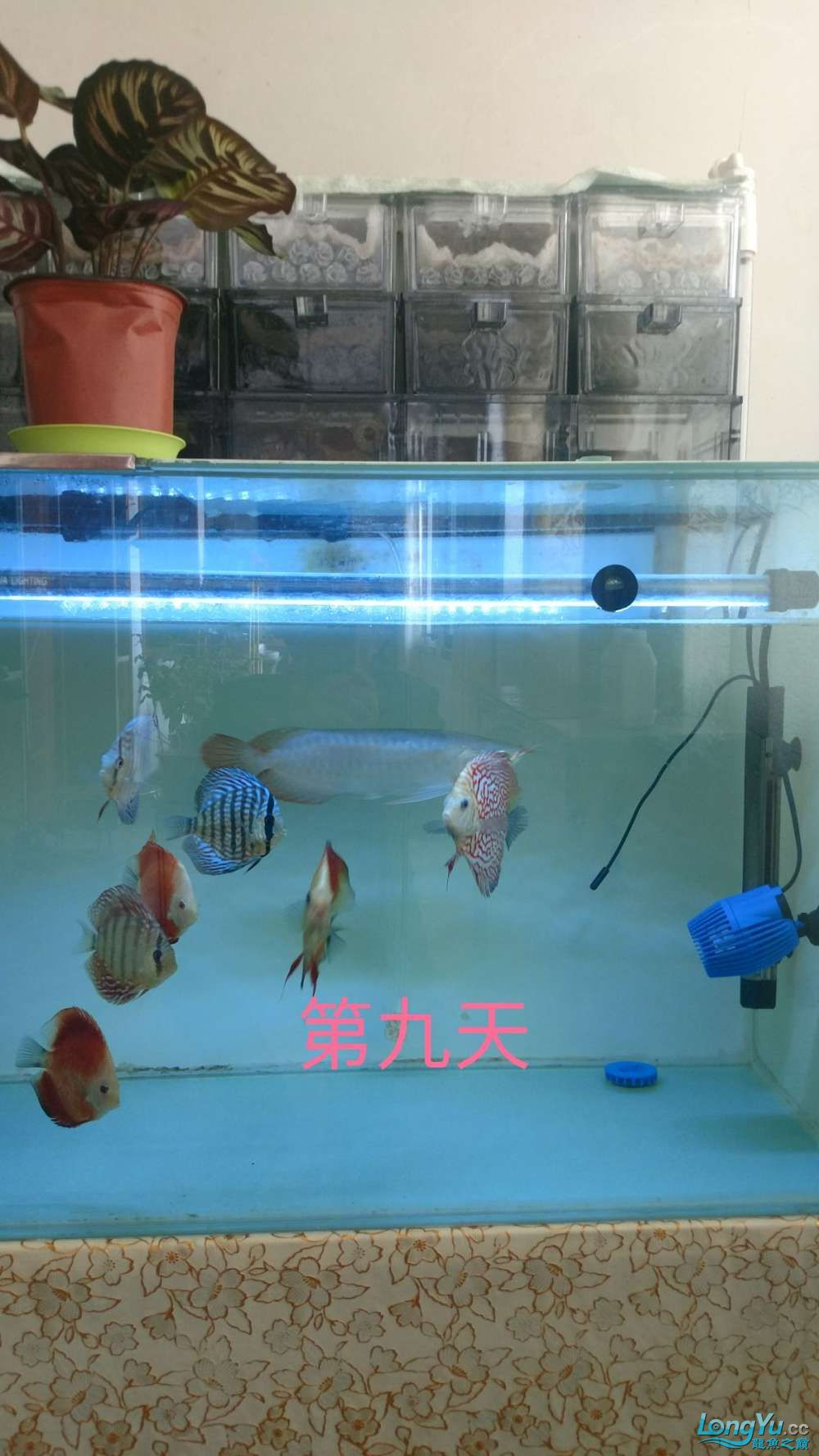 十川滤材试用报告 西安龙鱼论坛 西安博特第33张