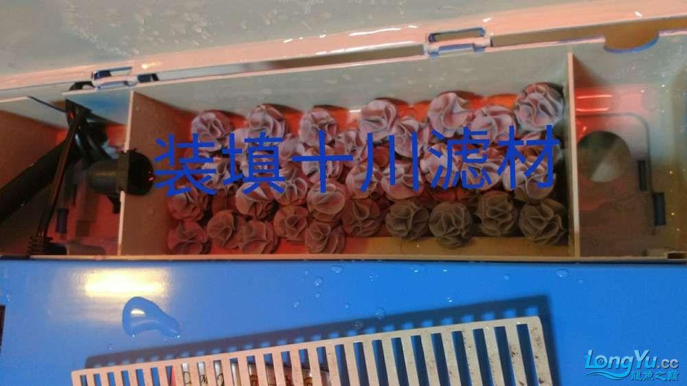 十川滤材试用报告 西安龙鱼论坛 西安博特第45张