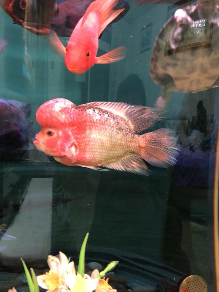 六个多月了 西安观赏鱼信息 西安博特第1张