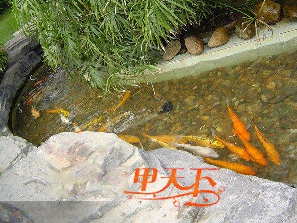 新手入的杂鲷混养请大佬指点不足 西安观赏鱼信息 西安博特第2张