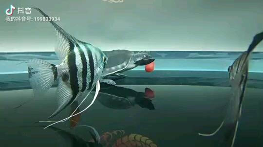 周一的早上就是要充满希望 西安观赏鱼信息 西安博特第1张