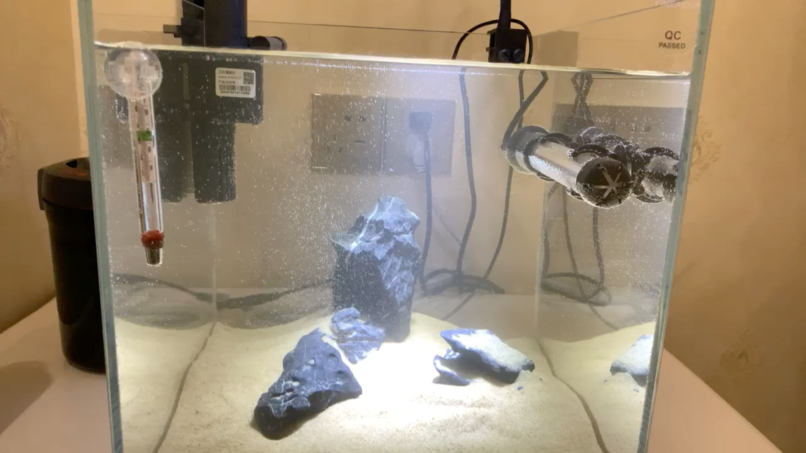 养水中这么多气泡呢 西安观赏鱼信息 西安博特第1张