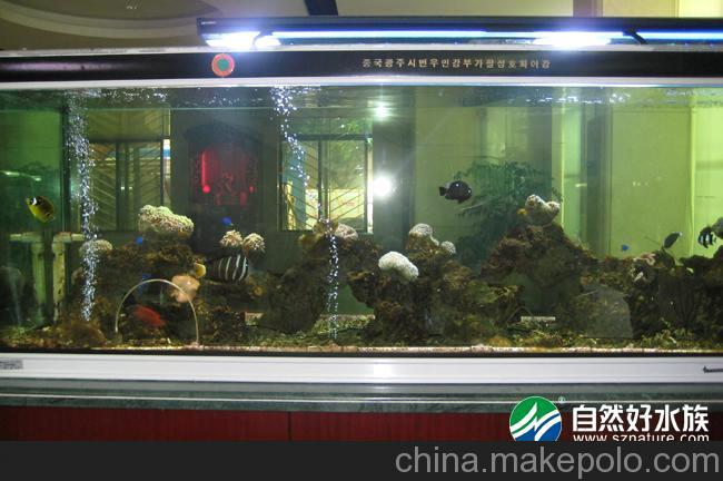 养水中这么多气泡呢 西安观赏鱼信息 西安博特第2张