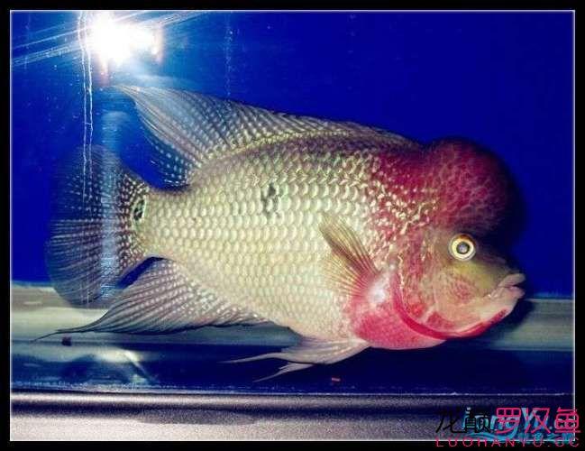新年愿望鱼勇祝大家新年快乐