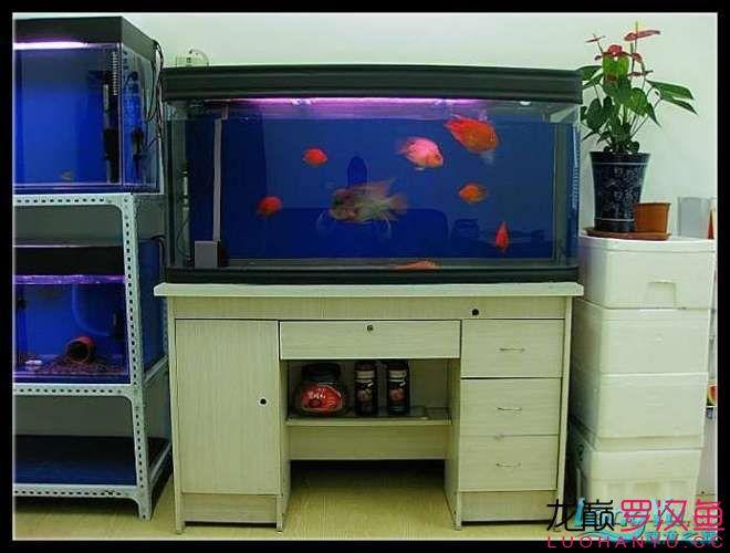 新年愿望鱼勇祝大家新年快乐 西安观赏鱼信息 西安博特第3张