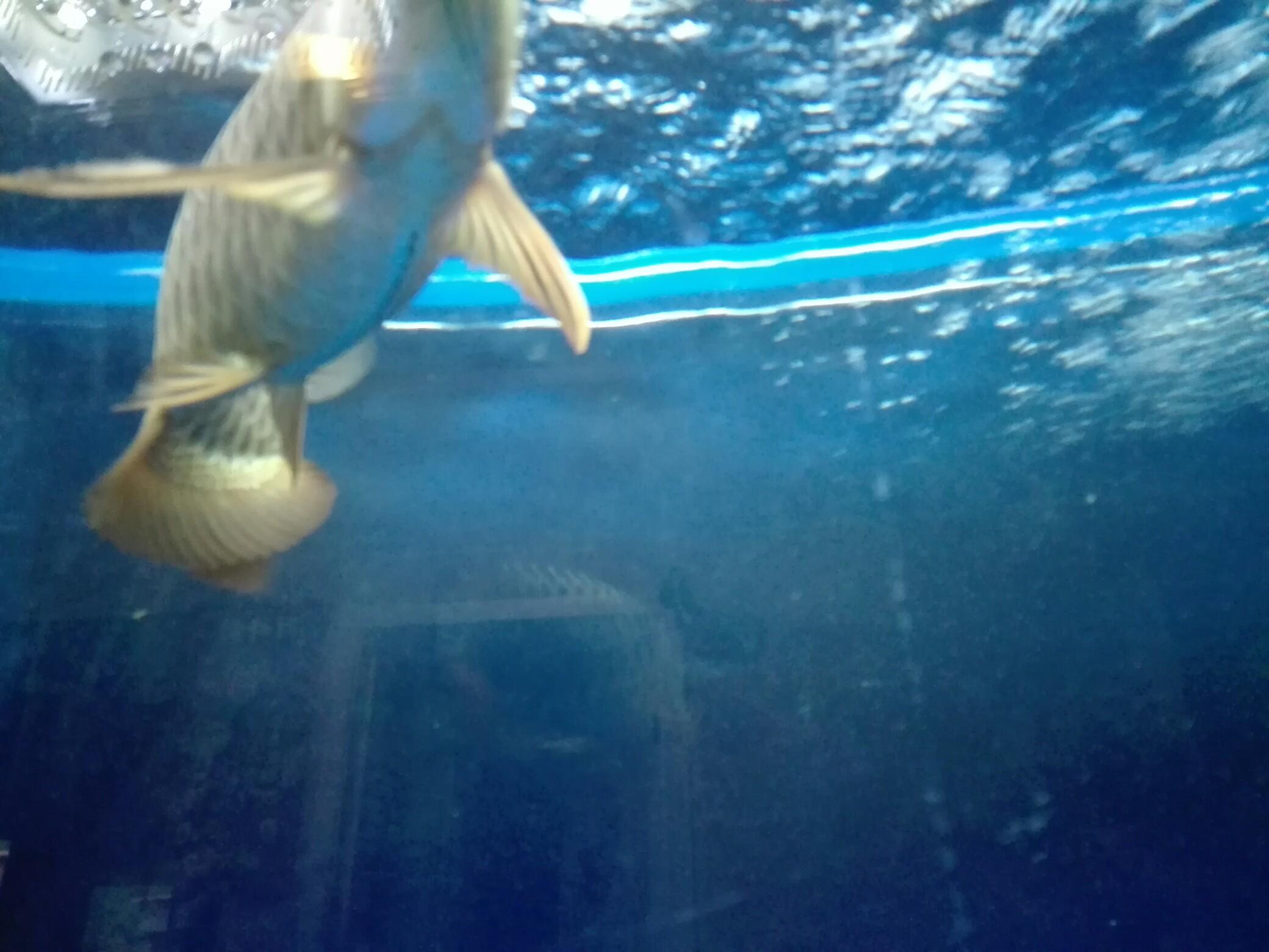 等等等 西安观赏鱼信息 西安博特第2张