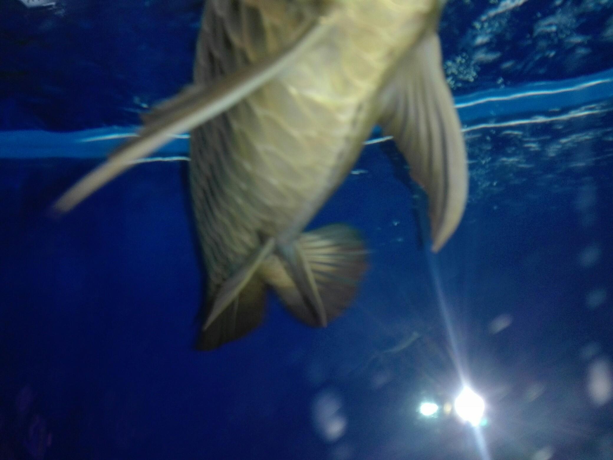 等等等 西安观赏鱼信息 西安博特第1张