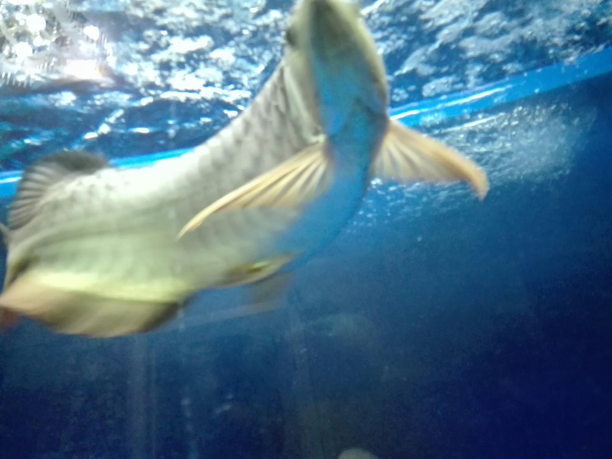 等等等 西安观赏鱼信息 西安博特第4张