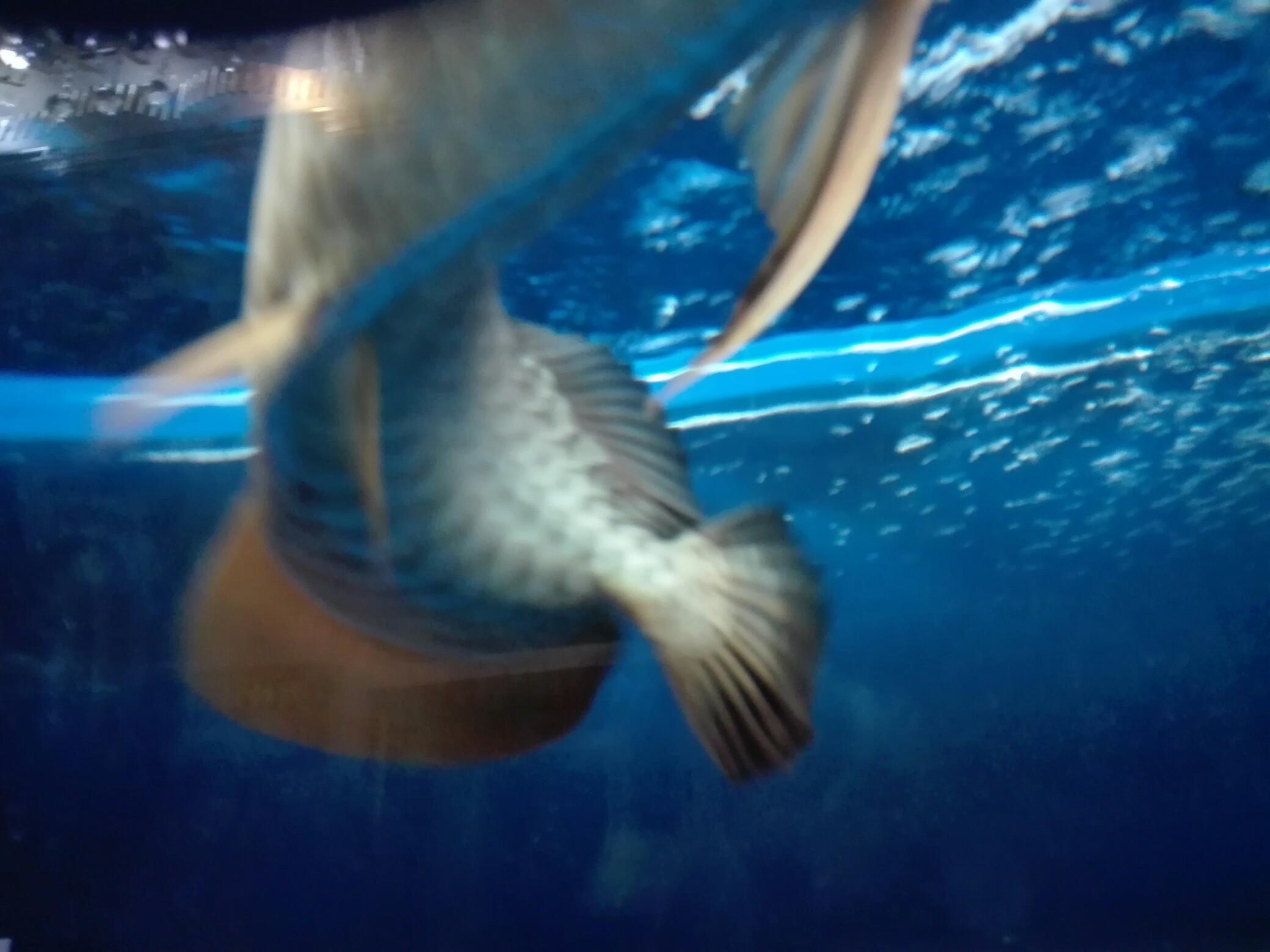 等等等 西安观赏鱼信息 西安博特第5张