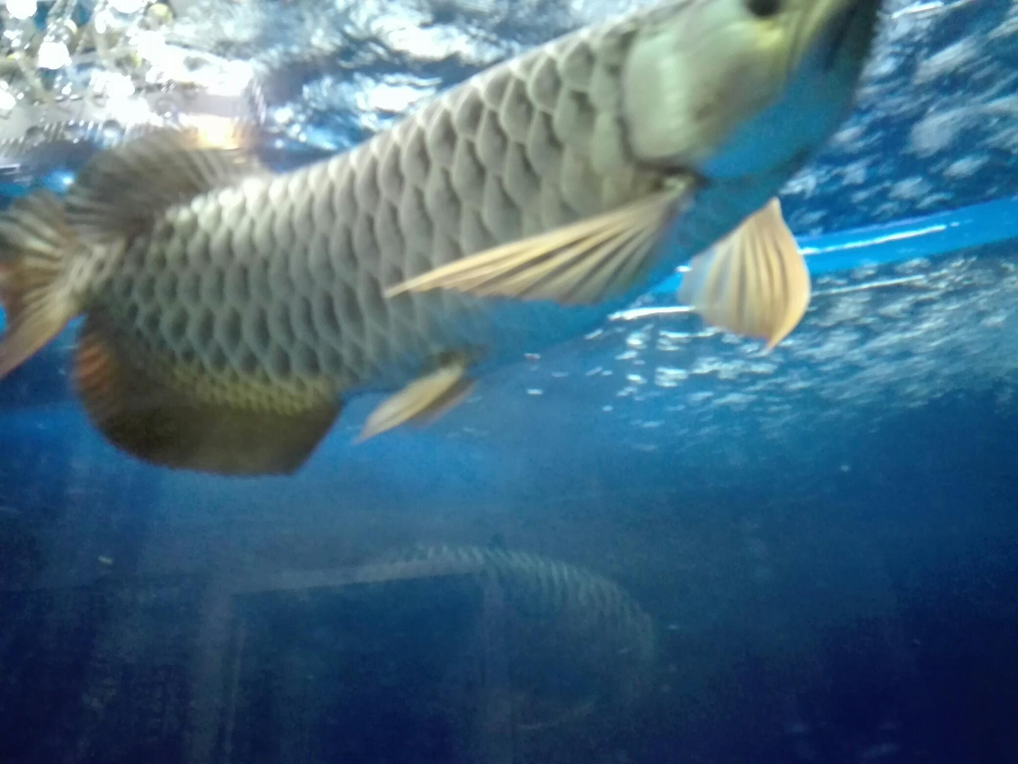 等等等 西安观赏鱼信息 西安博特第6张