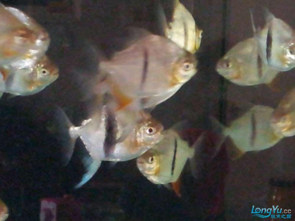 等等等 西安观赏鱼信息 西安博特第8张