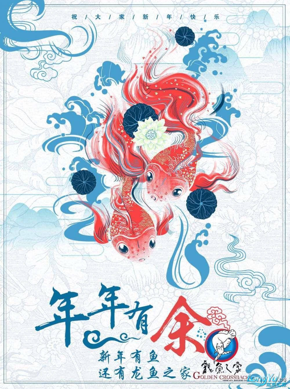 龙鱼之家祝各位鱼友元旦快乐 西安龙鱼论坛 西安博特第1张