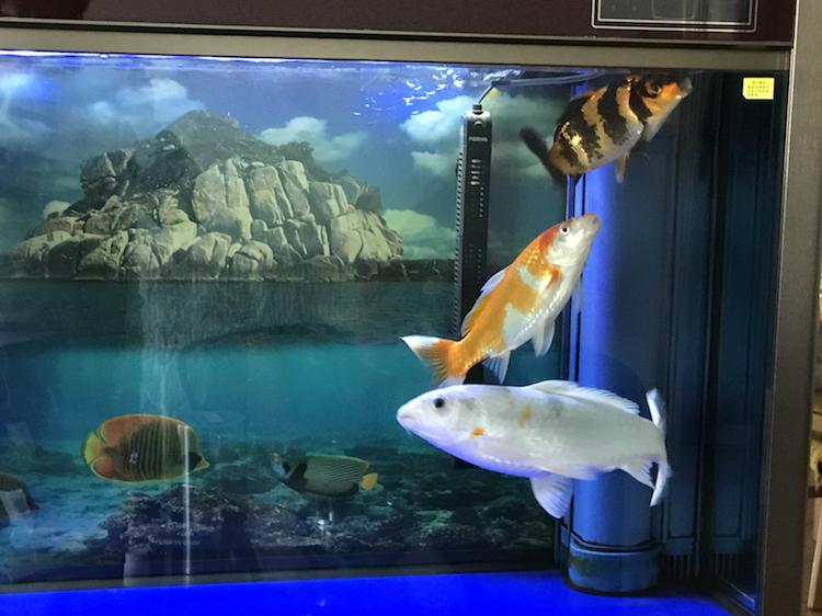 小土炮可爱吧 西安观赏鱼信息 西安博特第7张