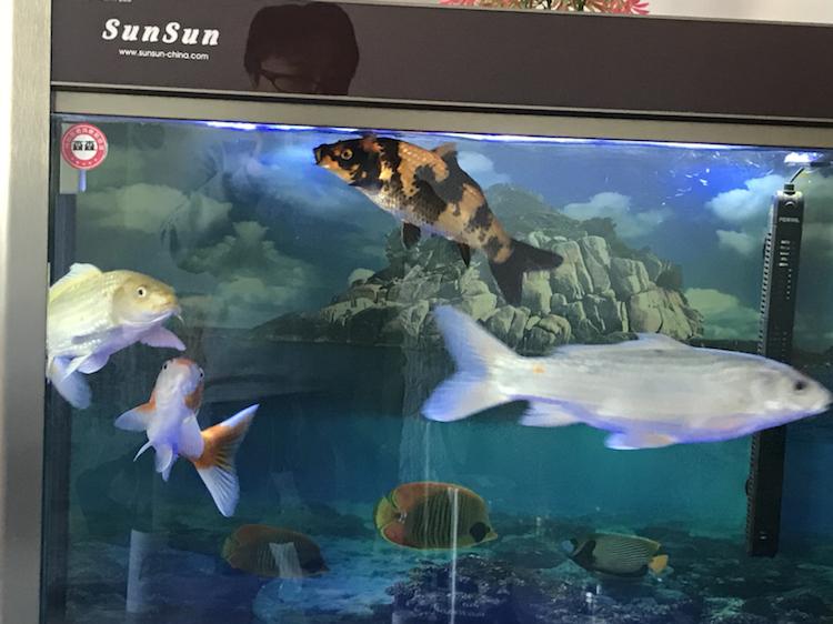 小土炮可爱吧 西安观赏鱼信息 西安博特第8张