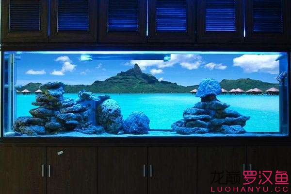 【西安花鸟鱼市】PS :如何把图片放到鱼缸后面呢做成一个有背景的鱼缸 西安龙鱼论坛 西安博特第1张