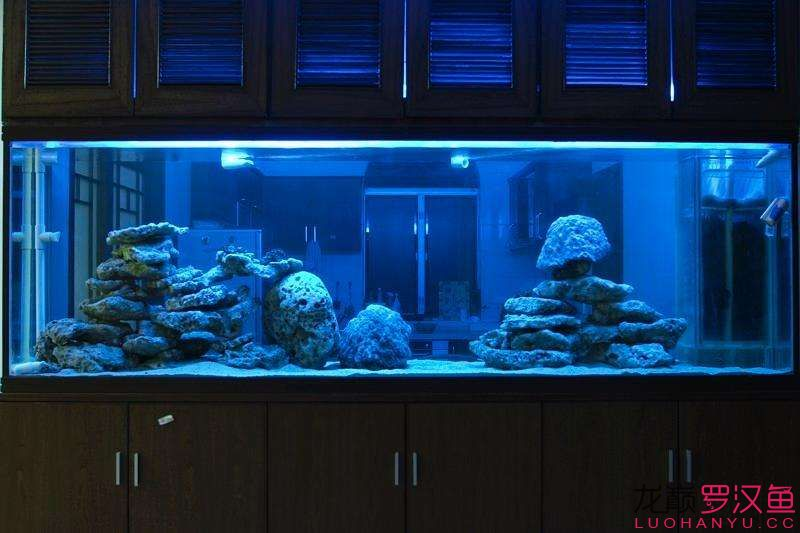 【西安花鸟鱼市】PS :如何把图片放到鱼缸后面呢做成一个有背景的鱼缸 西安龙鱼论坛 西安博特第3张