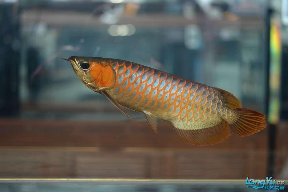 中国深圳国际水族文化节 西安龙鱼论坛 西安博特第4张