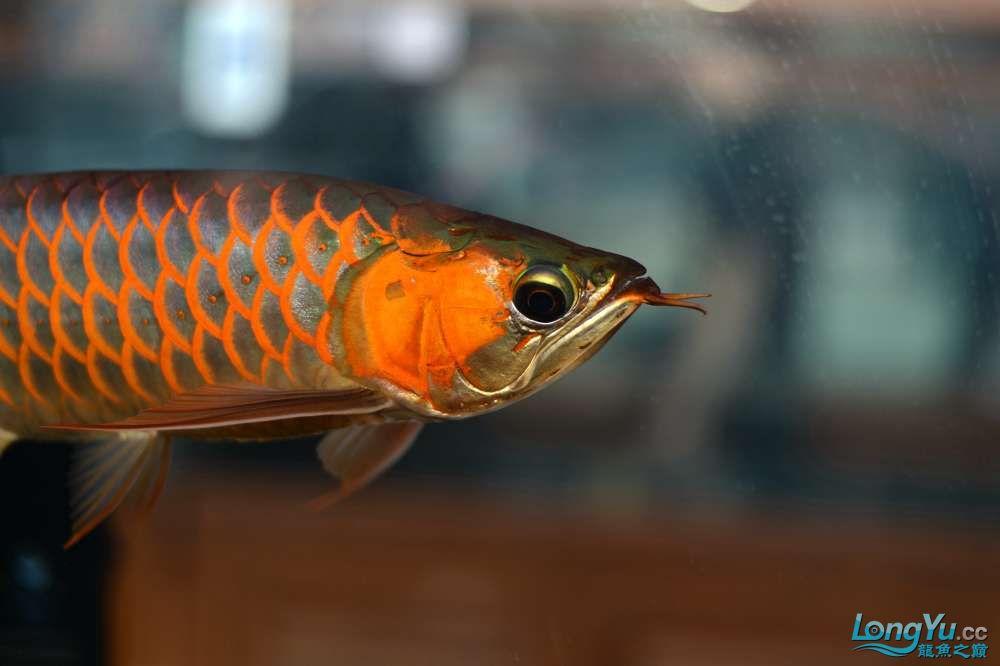 中国深圳国际水族文化节 西安龙鱼论坛 西安博特第5张