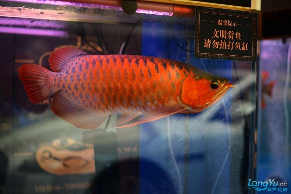 中国深圳国际水族文化节 西安龙鱼论坛 西安博特第6张