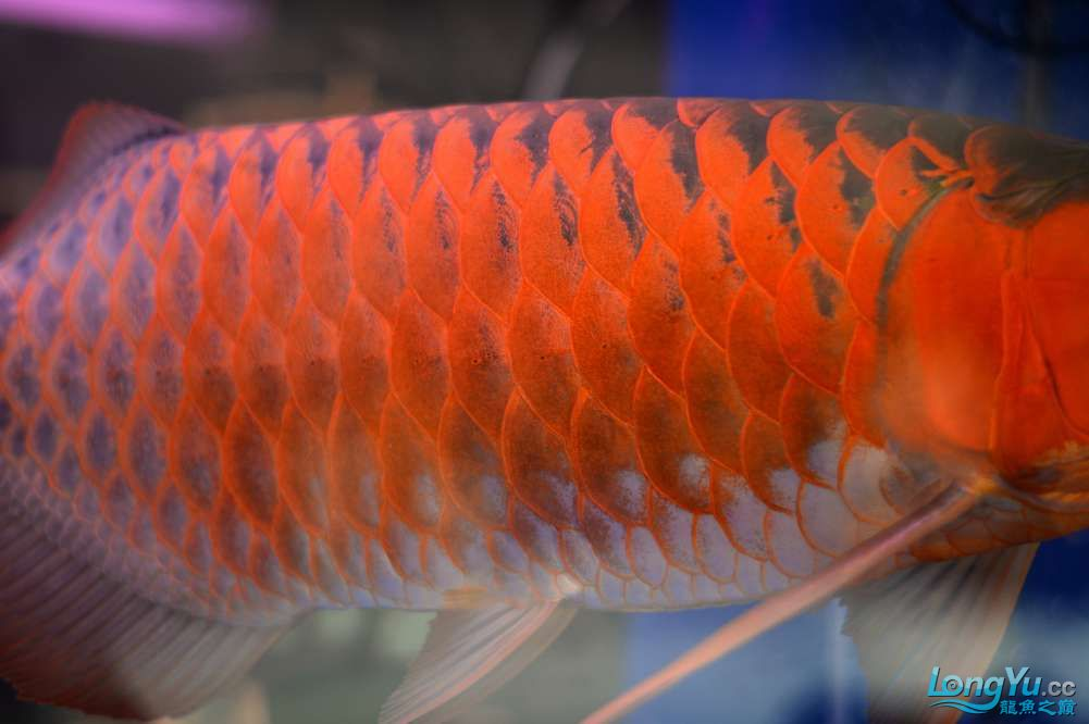 中国深圳国际水族文化节 西安龙鱼论坛 西安博特第7张