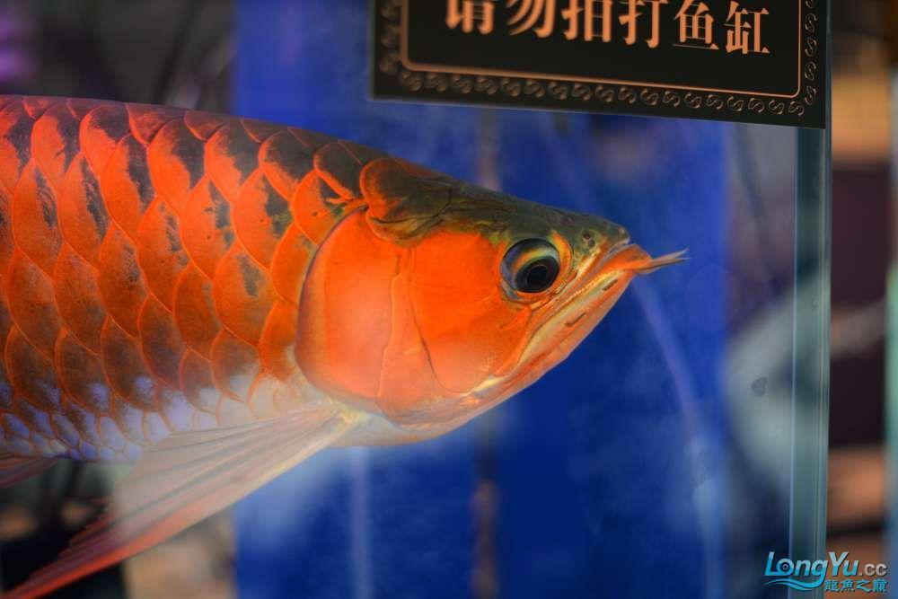 中国深圳国际水族文化节 西安龙鱼论坛 西安博特第8张