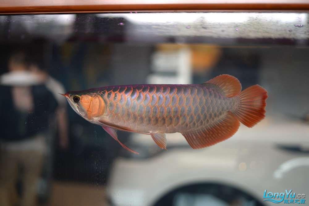 中国深圳国际水族文化节 西安龙鱼论坛 西安博特第9张