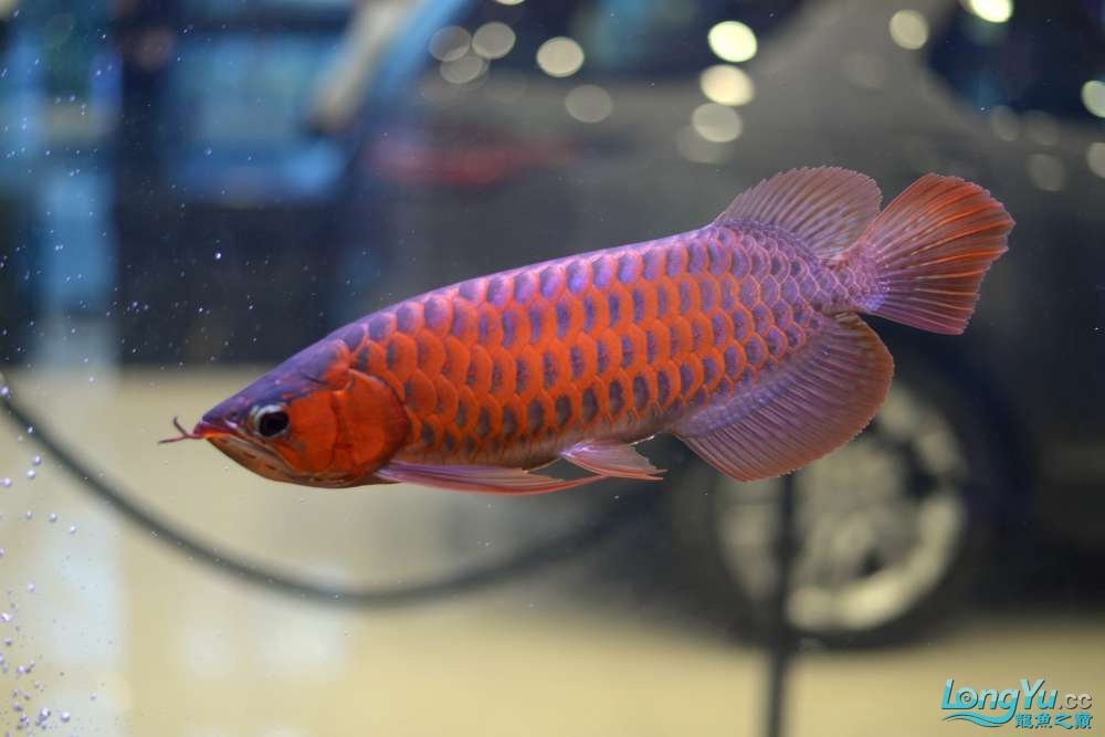 中国深圳国际水族文化节 西安龙鱼论坛 西安博特第10张