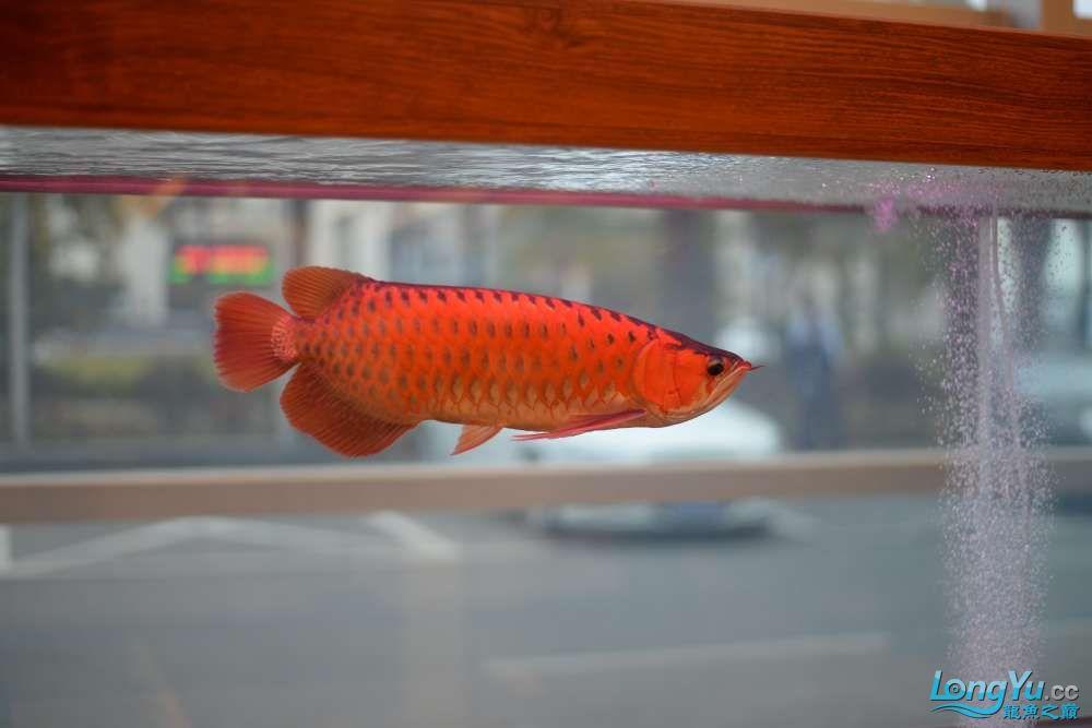 中国深圳国际水族文化节 西安龙鱼论坛 西安博特第11张