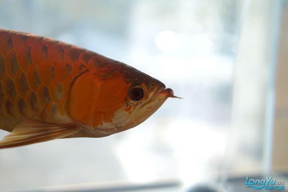中国深圳国际水族文化节 西安龙鱼论坛 西安博特第16张