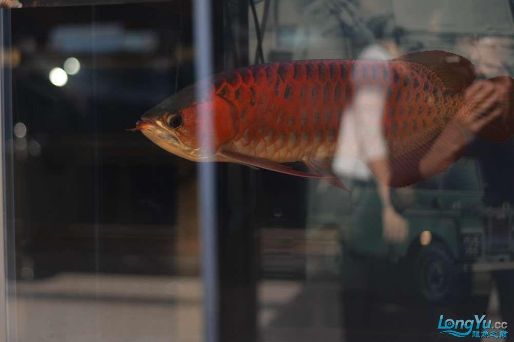 中国深圳国际水族文化节 西安龙鱼论坛 西安博特第18张