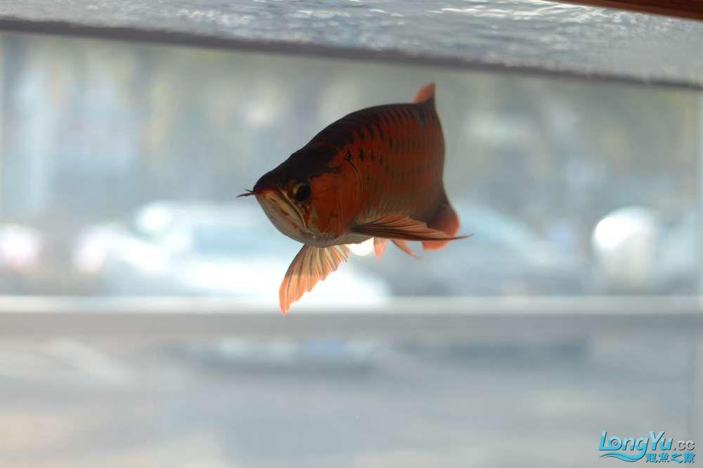 中国深圳国际水族文化节 西安龙鱼论坛 西安博特第23张
