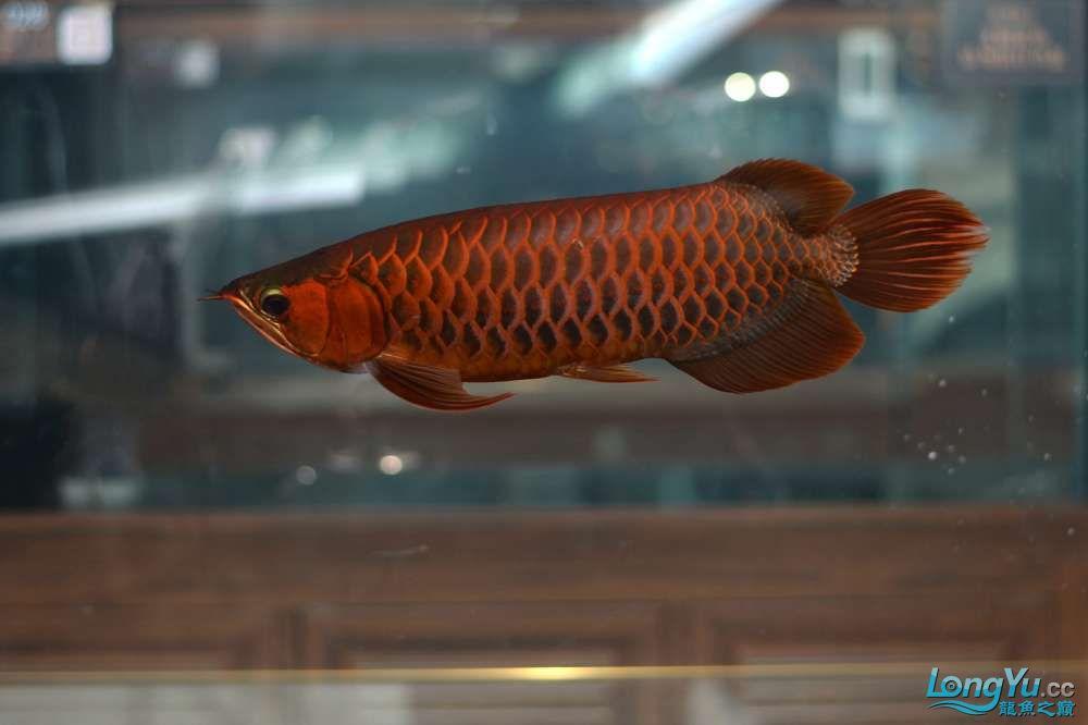 中国深圳国际水族文化节 西安龙鱼论坛 西安博特第30张