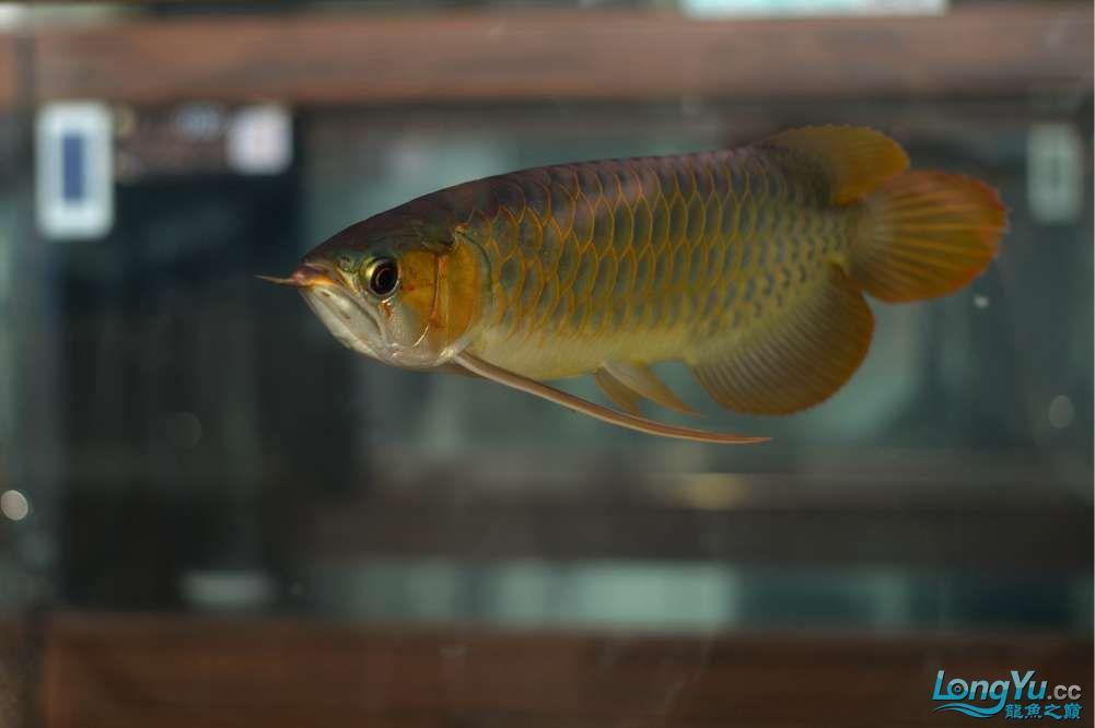 中国深圳国际水族文化节 西安龙鱼论坛 西安博特第33张