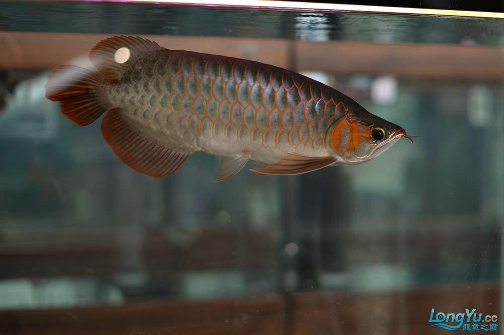 中国深圳国际水族文化节 西安龙鱼论坛 西安博特第34张